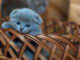 Słodki kotek w koszyku!