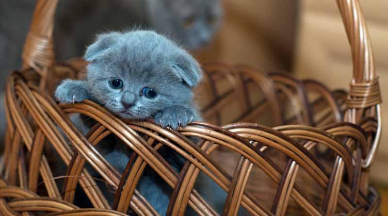 Podróż z kotem. Jak przewozić kota w samochodzie?